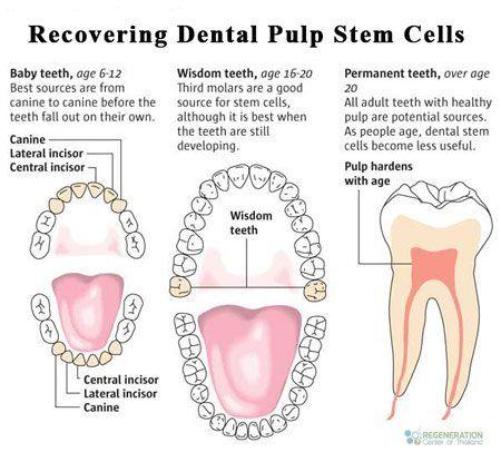 source-dental-stem-cells